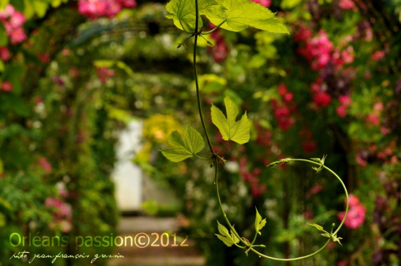 sous-le-pergola-photo-jf-grossin-n2